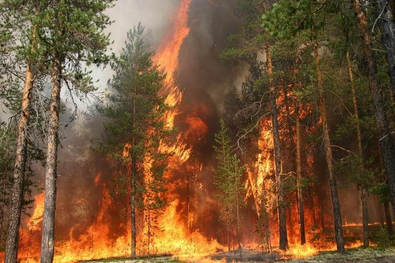 У п'яти областях України заборонили полювання через пожежі