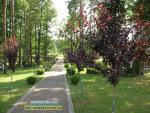 Музей лісу Костопільське лісництво