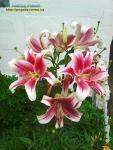 Барви квітів